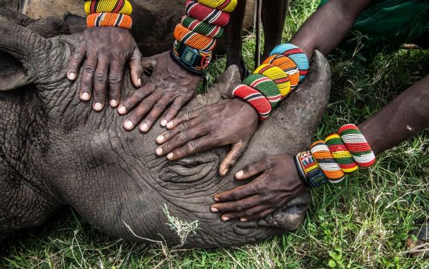 Ami Vitale/National Geographic, Salvataggio di un cucciolo di rinoceronte rimasto orfano in Africa