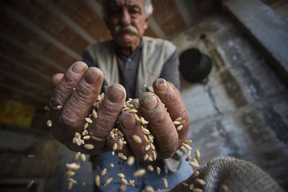 Scena contadina nel Subappennino Dauno - Ph. Carlos Solito©