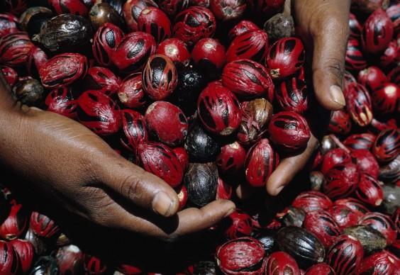 DEAN CONGER/National Geographic: Grenada, Indie Occidentali britanniche