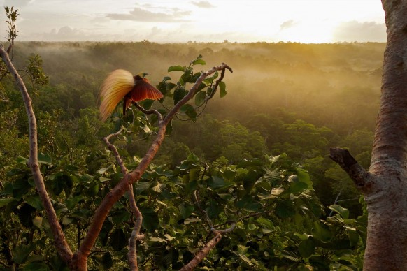 TIM LAMAN/National Geographic: Wokam, Isole Aru, Indonesia