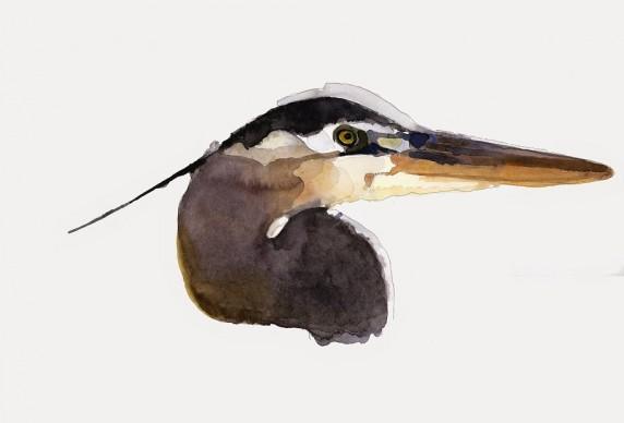 Giorgio Maria Griffa, Great blu heron, 38x56