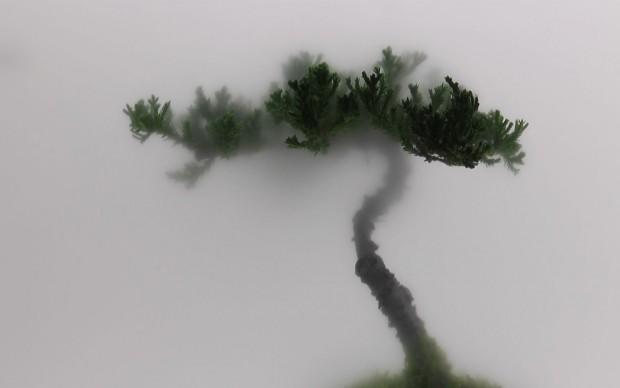 Wu Chi-Tsung, Still Life 01-Pine, 2009, Courtesy l'artista e TINA KENG GALLERY