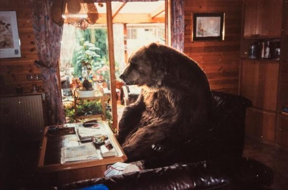 Bear - Pascal Florks, GERMANIA