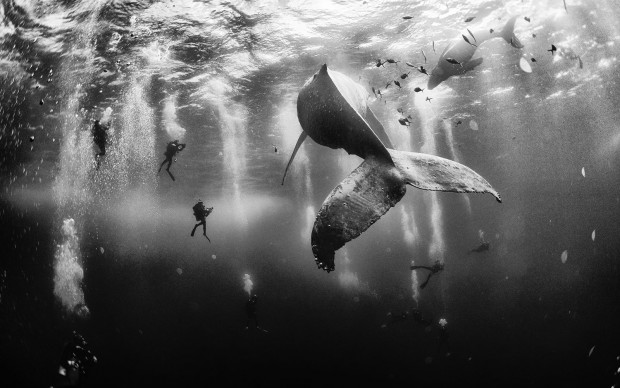 National Geographic Photo Contest 2015 Winner