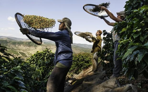 Steve McCurry, Coltivatori di caffé in una piantagione a Lambari, Brasile, 2010