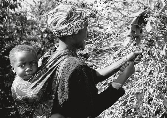 Paolo Solari Bozzi © - Munali Coffee Farm, Zambia, 2014  - Silver Gelatin print