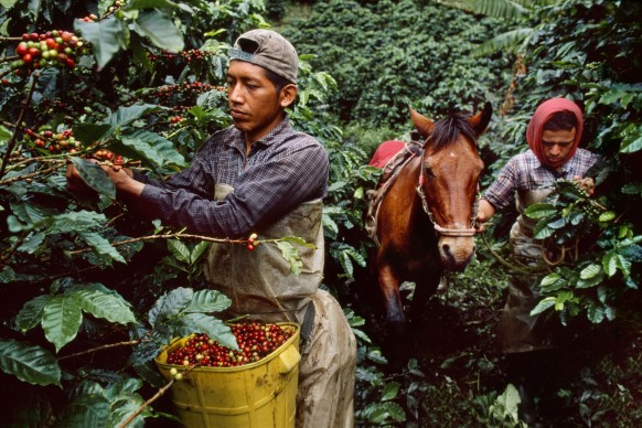 Steve McCurry, Colombia, 2005