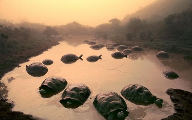 frans-lanting-tartarughe isole galapagos