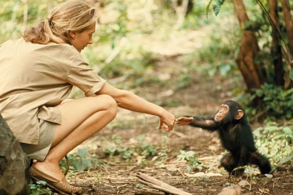 Hugo Van Lawick, Tanzania, 1964. Un gesto semplice, eppure incredibilmente toccante, tra Jane Goodall e il piccolo Flint.