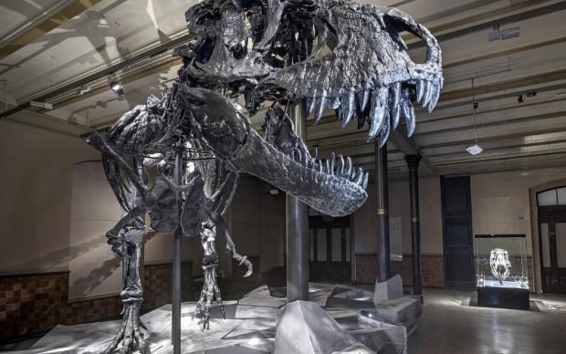 Tristan, scheletro Tyrannosaurus rex, museo di storia naturale di Berlino