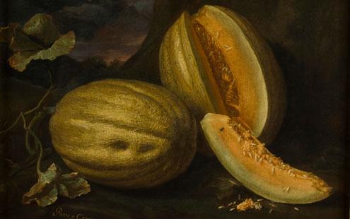 """Bartolomeo Bimbi, Popone di Ponte a Cappiano, 1694, olio su tela, cm 78 x 97,5, Firenze, Museo di Storia Naturale, Sezione Botanica. Iscrizioni: """"Ponte a Cappiano 1694/ libbre 29 ½"""""""