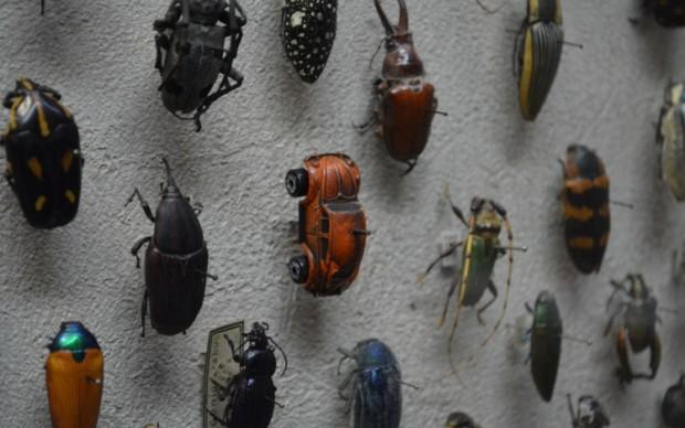 cleveland museum of natural history scherzo gioco