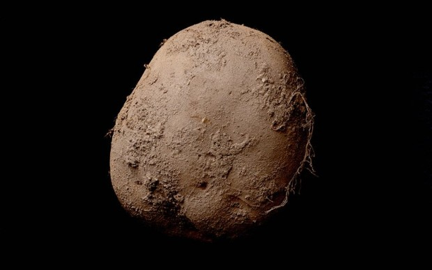 kevin abosh fotografia patata venduta 1 milione di dollari