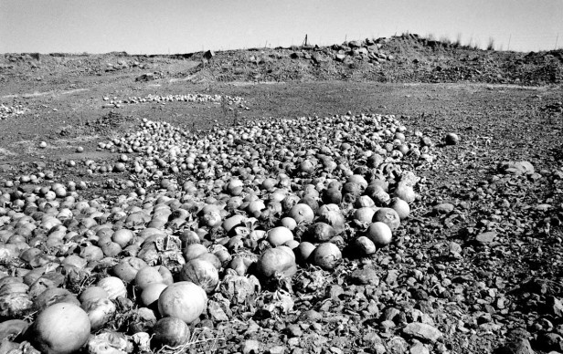 Santu Mofokeng,  Undersized, stunted-in-growth and rotting melon dumped in the veld outside Kroonstad, Free State (2007), dalla serie 'Climate Change', stampa ai pigmenti © The Santu Mofokeng Foundation, Images courtesy Lunetta Bartz, MAKER, Johannesburg
