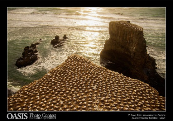 Isaac Fernandez Galisteo, Tres Cantos - Spagna, terzo classificato Sezione  Uccelli e Chirotteri - Oasis Photocontest 2015
