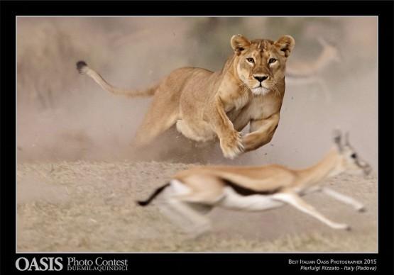 Pierluigi Rizzato, Borgoricco (PD), Premio Endeavour Safaris per il vincitore italiano - Oasis Photocontest 2015