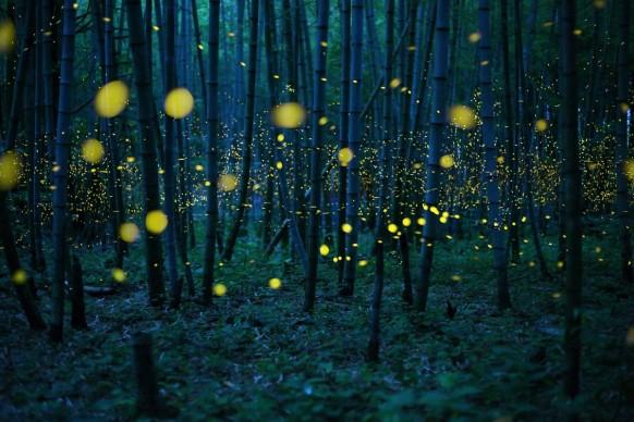 Enchanted Bamboo Lights © Kei Nomiyama, Japan, Open Photographer of the Year, 2016 Sony World Photography Awards