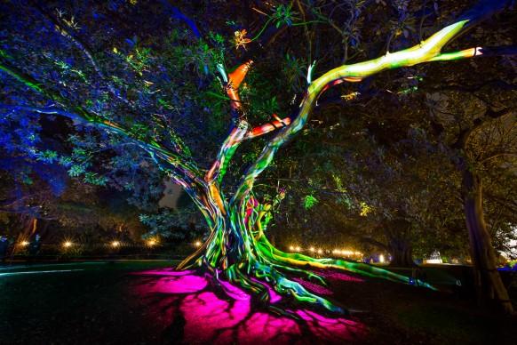 Vivid Sydney 2016, Royal Botanic Gardens. Photo Credit - Destination NSW