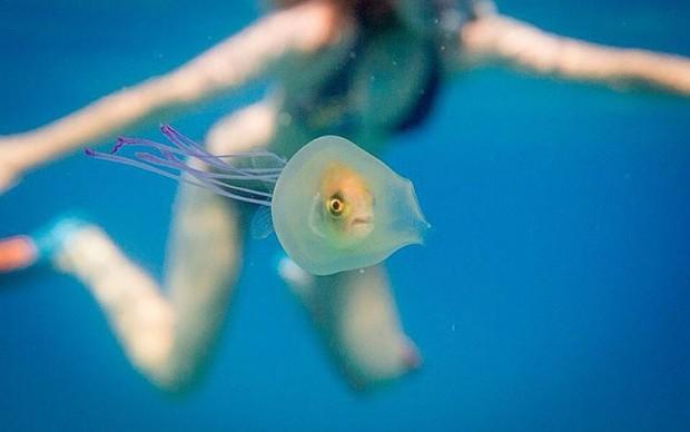 tim samuel pesce intrappolato nella medua australia