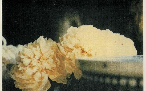 cy-twombly-photograph