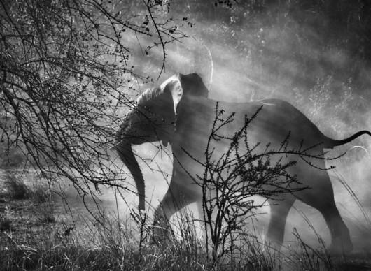 Kafue National Park, Zambia, 2010 © Sebastião Salgado/Amazonas Images/Contrasto