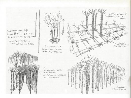 Giuliano Mauri, Cattedrale Vegetale. Disegni © Archivio Giuliano Mauri