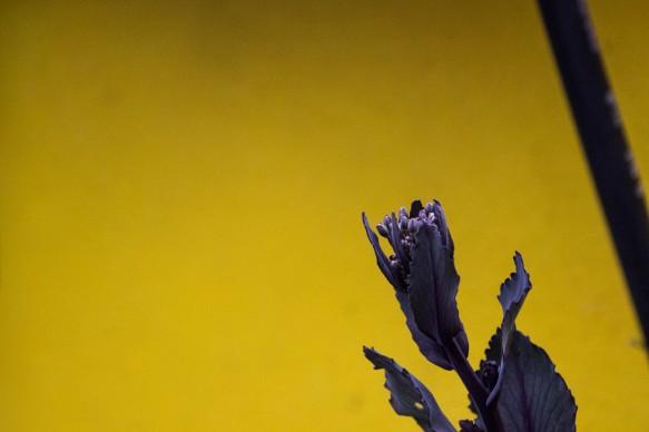 Ri-Scatti, la ricerca della felicità, foto di Matteo Davide, PAC - Padiglione Arte Contemporanea, Milano