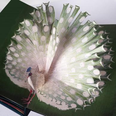 Pop Up Birds Book, Chiara Bianchini, Italy
