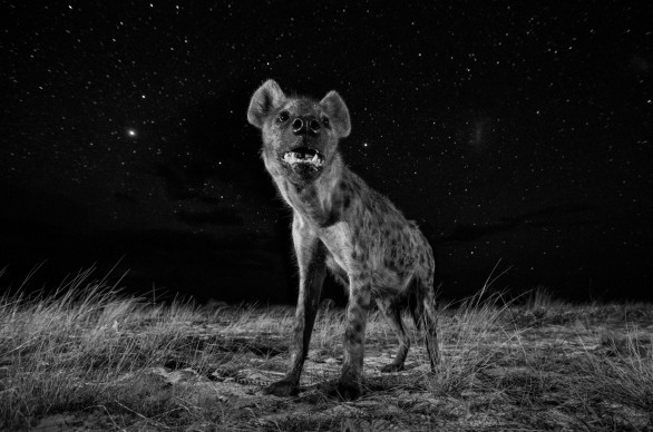 Will Burrard-Lucas -United Kingdom, Professional, Natural World, 1st Place, 2017, Sony World Photography Awards