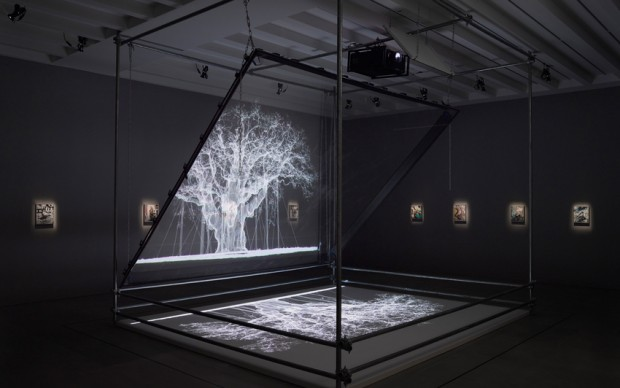 Mat Collishaw, Installation view, 2017, Courtesy the artist and BlainSouthern, Photo Peter Mallet