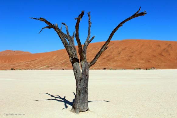 © Gabriele Merlo DEAD VLEI STAND ALONE, Namibia