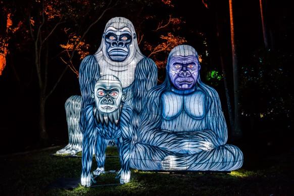 Vivid Sydney 2017, Taronga Zoo, Gorilla Gram. Photo Destination NSW