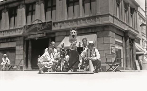 Flash, il cane della Metro-Goldwyn-Mayer, 1934Flash, the Metro-Goldwyn-Mayer dog, 1934In prestito da/Loaned byJohn Kobal Foundation, London