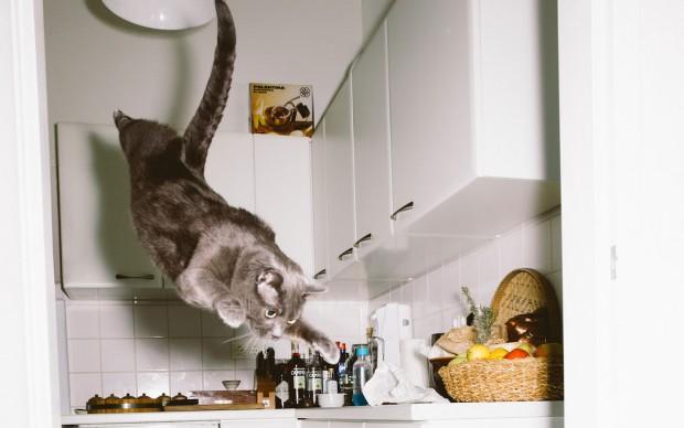 Jumping Cats © Daniel Gebhart de Koekkoek