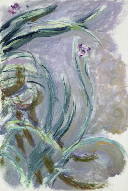 Claude Monet, Iris, 1924-1925, Parigi, Musée Marmottan Monet © Musée Marmottan Monet, paris c Bridgeman- Giraudon / presse