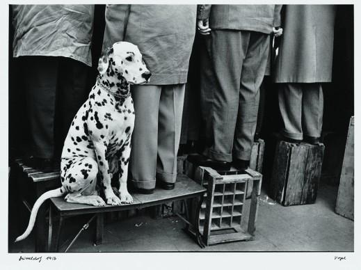 Walter Vogel, Dalmatian dog, Düsseldorf, 1956 © Walter Vogel