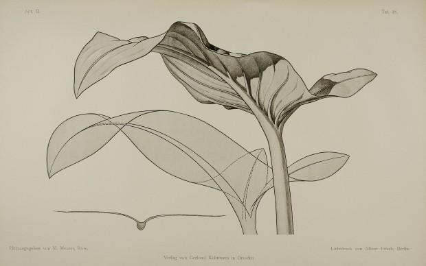 Moritz Meurer, Pflanzenformen, 1895, Tafel 38, © Kunstbibliothek – Staatliche Museen zu Berlin / Saturia Linke