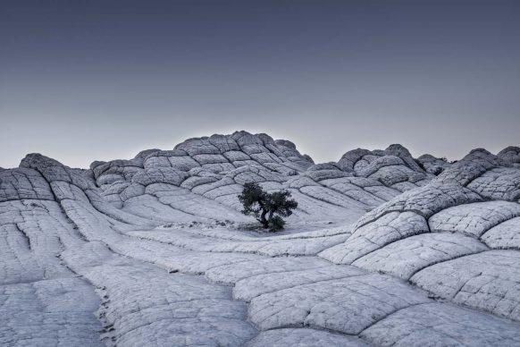 Tom Jacobi, Lonely Tree (Arizona, USA 2015)