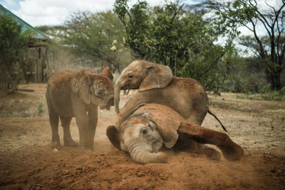 Warriors Who Once Feared Elephants Now Protect Them. Ami Vitale, USA per National Geographic