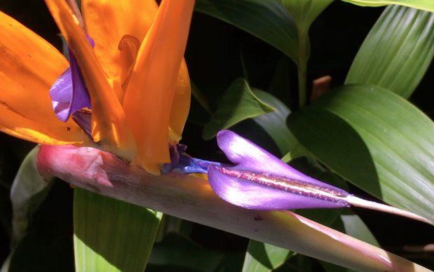 Seduzione Repulsione - quello che le piante non dicono