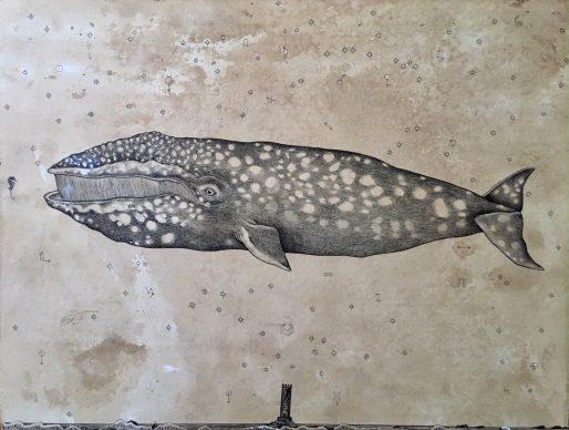 Andrea Collesano, Immensae (balena), disegno a china su carta, 2017