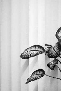 Saskia Groneberg, Untitled Series: Büropflanze (office plant), 2012 © Saskia Groneberg, Prix Pictet 2017