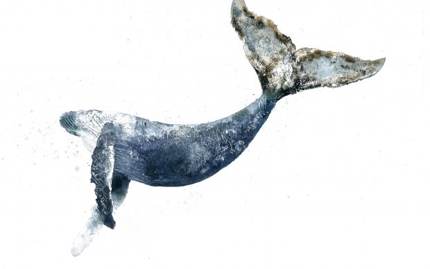 Giorgio Maria Griffa, Megaptera novaeangliae, acquarello su carta, 2017, 56x76 cm