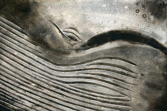 Giorgio Maria Griffa, Occhio di misticeto 2, acquarello su carta, 2017