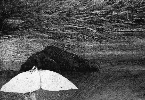 Giorgio Maria Griffa, White tail, acquarello su carta, 2016