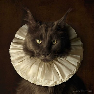 Marie Cecile Thijs, Cat with White Collar I, 2009