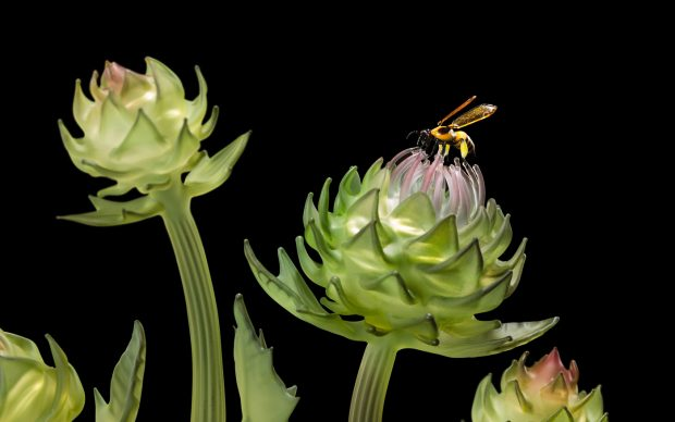 Janis Miltenberger, Cynara's Lush Gift (detail), Photographer Peter Kuhnlein @ACME Creative, bee created by Wesley Fleming
