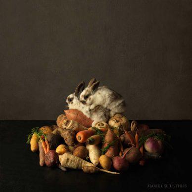 Marie Cecile Thijs, Rabbit's Paradise, 2013