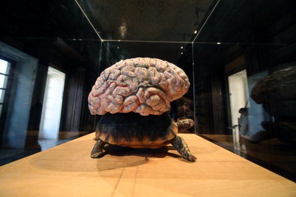 Jan Fabre, L'universo trasportato da una tartaruga, 2014. Collezione privata. Opera esposta alla Biblioteca Lucchesiana. Foto PETYX PALERMO