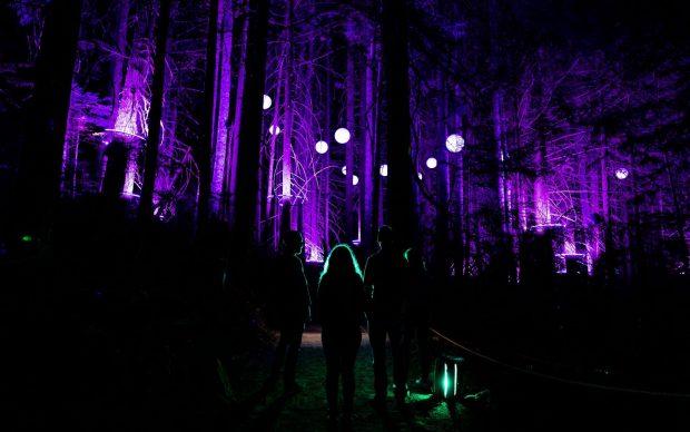 Vallea Lumina installazione storytelling immersivo bosco Canada